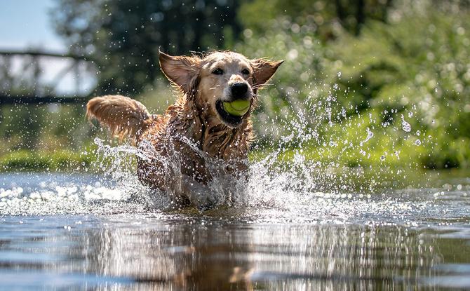 Wasserspaß für Hunde: Die schönsten Hunde-Badeseen in Bayern
