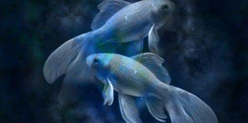 Jahreshoroskop 2019 - Fische