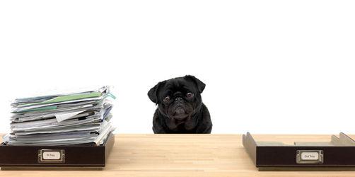 Hunde im Büro: Muss der Chef den Vierbeiner am Arbeitsplatz erlauben?