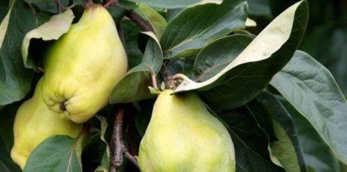 Schätze heben: Vielfalt im Herbstgarten