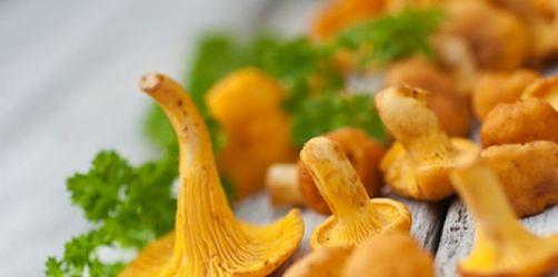 Terrine von Pilzen und Gemüse