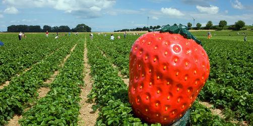 ANTENNE BAYERN Erdbeer-Atlas: Hier gibts die roten Früchtchen frisch vom Feld