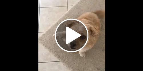 Dieser Hund muss mit unserem Studiotechniker Nullinger verwandt sein