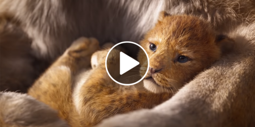 """""""Der König der Löwen"""" Trailer 2019: Der Disney-Klassiker neu verfilmt!"""