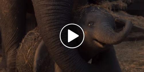 "Neuer ""Dumbo"" Trailer: So wird der neu verfilmte Disney-Klassiker 2019!"
