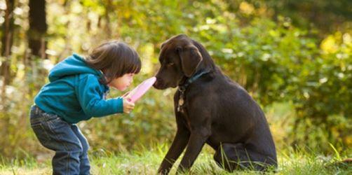 Bei Reisen mit Tieren rechtzeitig an Impfungen denken