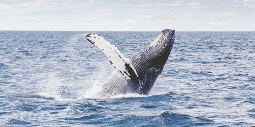 Island für Tierfreunde: Von Ausritten bis Walbeobachtung