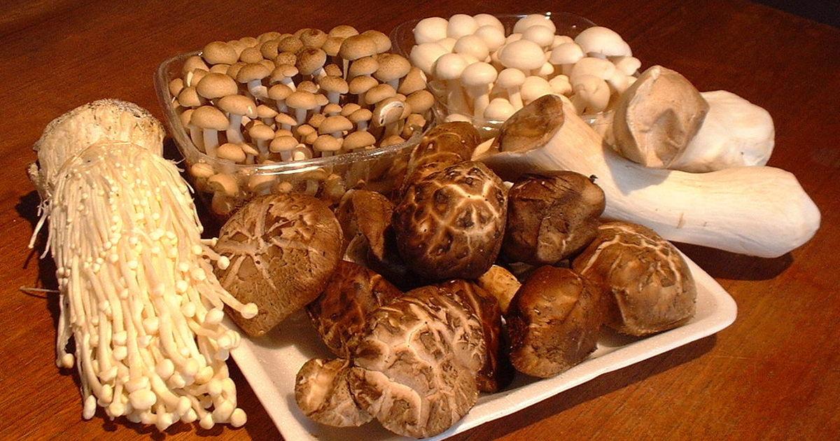 vorsicht listerien  edeka und netto rufen pilze von  u0026quot frihol u0026quot  zur u00fcck