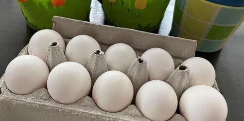 Eier ohne Kükenschreddern: Diese könnt ihr bedenkenlos kaufen