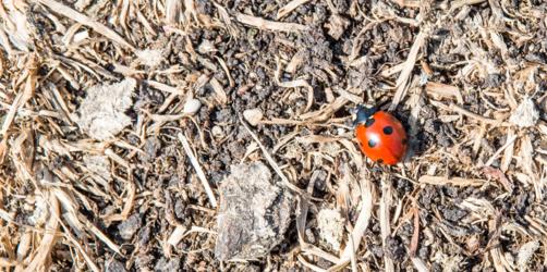 Hitze legt Böden trocken: Kommt der nächste Dürre-Sommer?