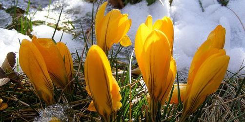 Hauch von Frühling: Hier wird es am Wochenende schön!
