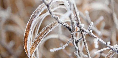 Eisheiligen: Hier müsst ihr mit Schnee und Frost bis ins Flachland rechnen