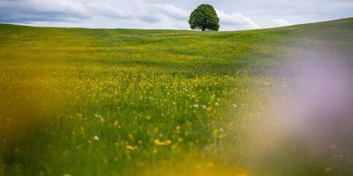 Frühling in Bayern: So wird das Wetter in eurer Region