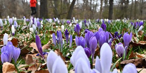 Endlich Frühling in Bayern: So wird das Wetter bei euch in der Region