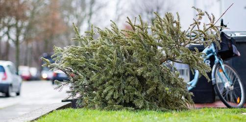So entsorgt ihr den Christbaum richtig - sonst drohen diese Strafen