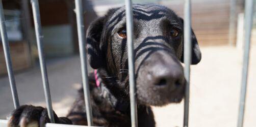 Tierheime schlagen Alarm: Immer mehr geben Tiere nach Lockdown ab