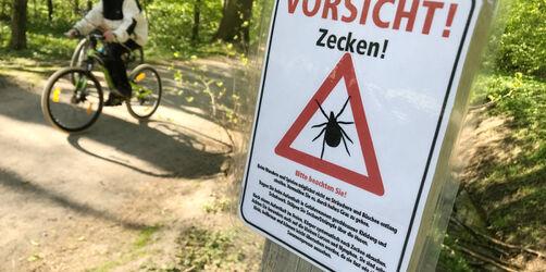 Fast ganz Bayern ist Zecken-Risikogebiet: So schützt ihr euch!