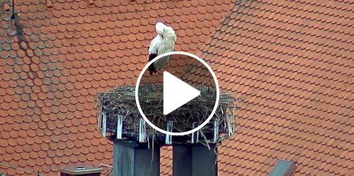 Weiden: Hier geht's zur Storchen- Webcam