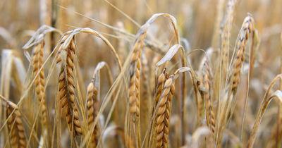 Nach Ernteausfällen im Sommer: Bauern können jetzt Dürrehilfen beantragen