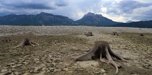 Stein- und Schlammwüste Forggensee