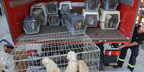 19 eingesperrte Hunde aus heißem Auto in Augsburg gerettet