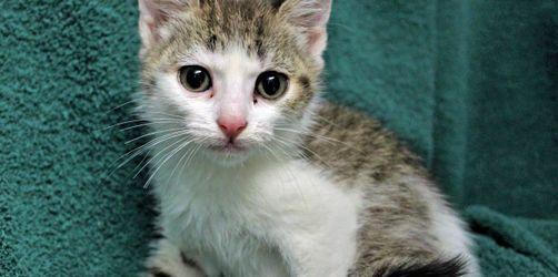 Kater-Stimmung in Kammlach im Allgäu: Wem gehört diese Baby-Katze?