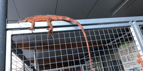 Vermeintliches Krokodil in Niederbayern entlaufen