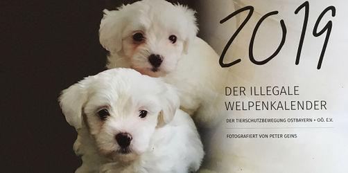 Kalender mit illegalen Hundewelpen: Tierheim Passau macht aufmerksam