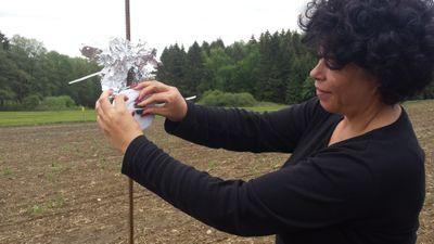 Wie Rauchmelder in Querenbach Wildschweine vertreiben