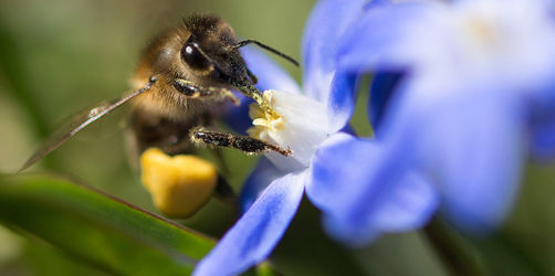 Artenschutz-Gesetz fix: So bekommen wir <i>Rettet die Bienen</i> im Alltag zu spüren