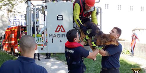 Feuerwehr München rettet Hund aus reißender Isar