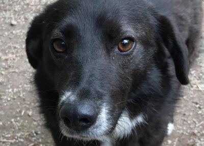 Wirbel um Hunde aus Rumänien: Besitzerin des Passauer Tierheims angezeigt