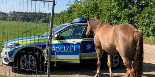 Wie Cowboys: Polizei Regenstauf muss verliebte Pferde einfangen