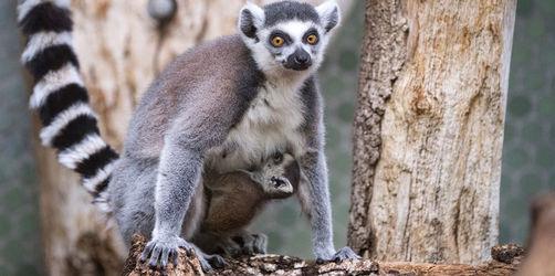 Tierische Kinderstube: So süß ist der Nachwuchs im Tierpark Hellabrunn