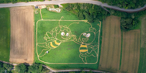 Utting am Ammersee: Biene Maja und Willi als Labyrinth im Maisfeld