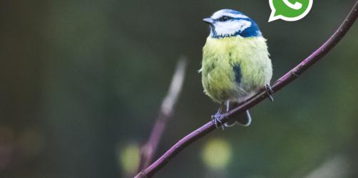 Bayernweiter Service: Vogelstimmen per WhatsApp erkennen