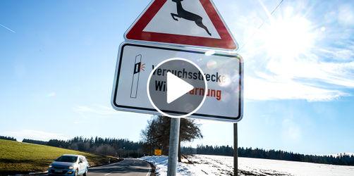 Neues Warnsystem soll Wildunfälle eindämmen: So funktioniert es