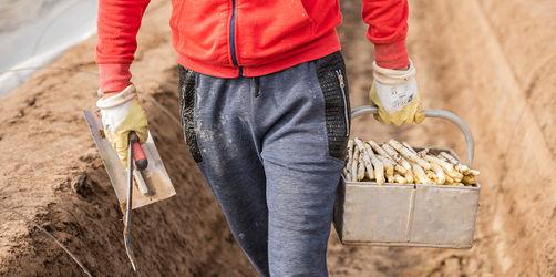 Arbeit in Corona-Zeiten: Jetzt als Erntehelfer bewerben