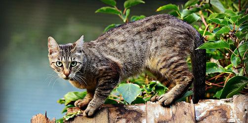Mehrere Katzen getötet - Tierschützer suchen unbekannten Tierquäler