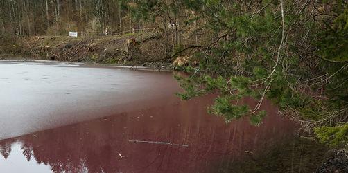 Naturschauspiel im Allgäu: Weiher bei Füssen blutrot gefärbt