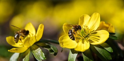 Bienen in Würzburg: Stadt verteilt Saatgut