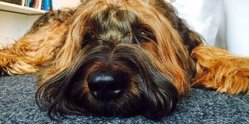 Hunde bereichern den Büroalltag! So vermeidet ihr Konflikte am Arbeitsplatz