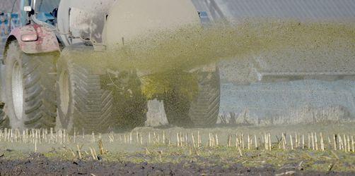 Zu viel Gülle, zu viel Nitrat im Grundwasser: EuGH verurteilt Deutschland