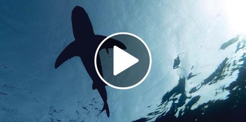 Überraschender Badegast: Hai am Strand von Dubrovnik gesichtet