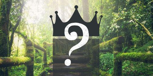 Wer wird Dschungelkönig 2019? Stimmt jetzt ab!