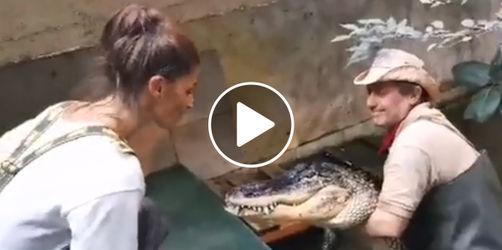 """<i>""""Wer lacht, verliert""""</i> im Video: Schiederin küsst Krokodil <i>Primo</i>"""