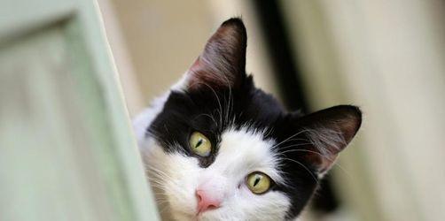 Vorsicht Katzenbisse: Kleine Wunden, große Gefahr