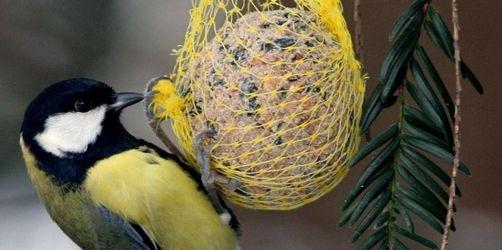 Harte Zeiten für Wildvögel: Die richtige Winterfütterung hilft