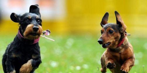 Neue Trends bei Hundenamen