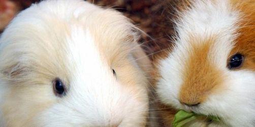 Ihre besten Kleintier-Bilder!